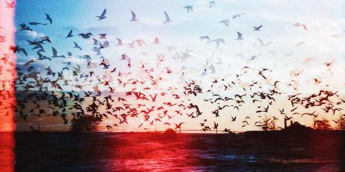 Скачать песню я свободен как птица баста