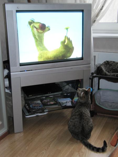 Кот и телевизор IMG_1206