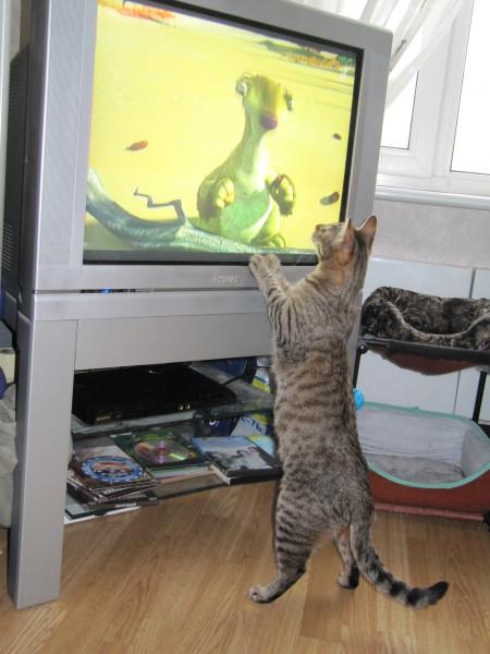 Кот и телевизор IMG_1209