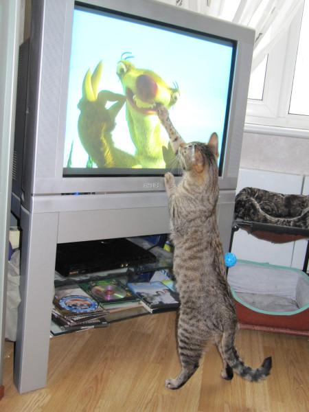 Кот и телевизор IMG_1210