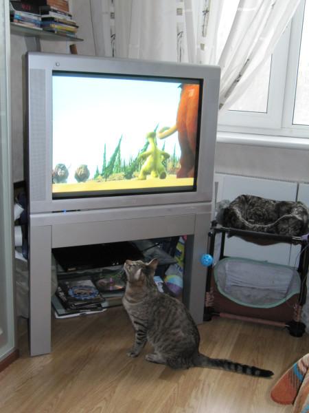 Кот и телевизор IMG_1211