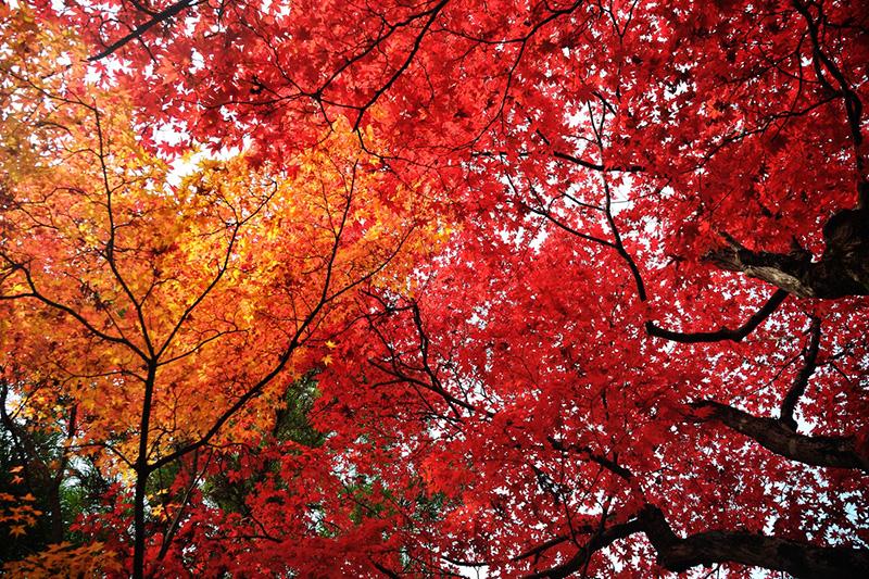 Япония_Хаконэ