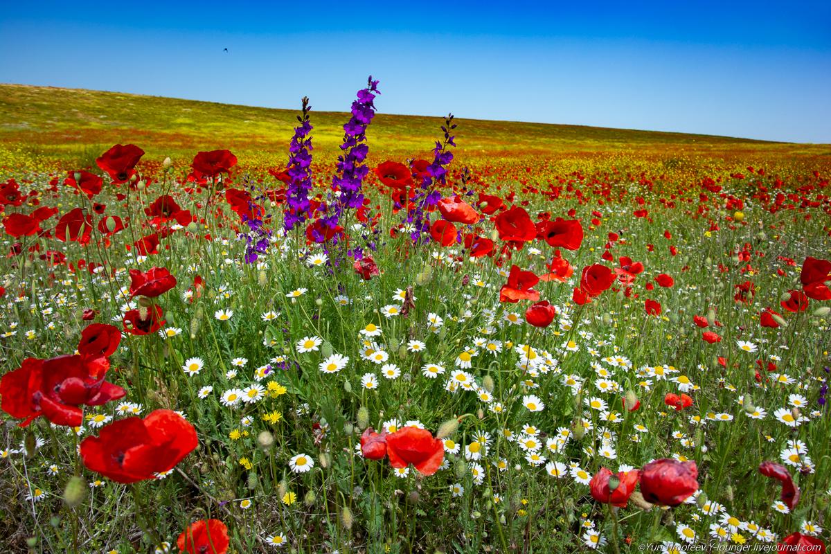 Картинки степь цветы