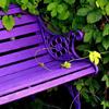 bench_