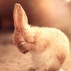 bunny_7