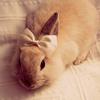 bunny_11