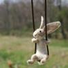 bunny_15