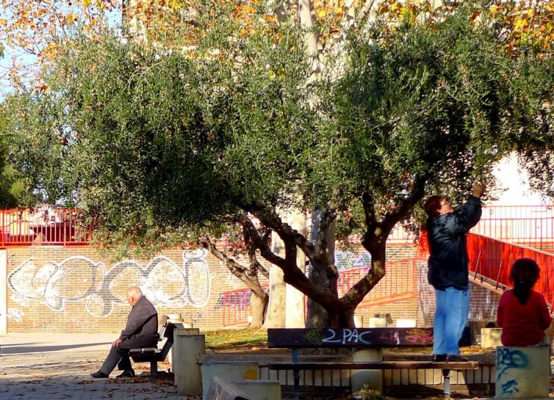 Деревья растут повсюду, даже в парках.