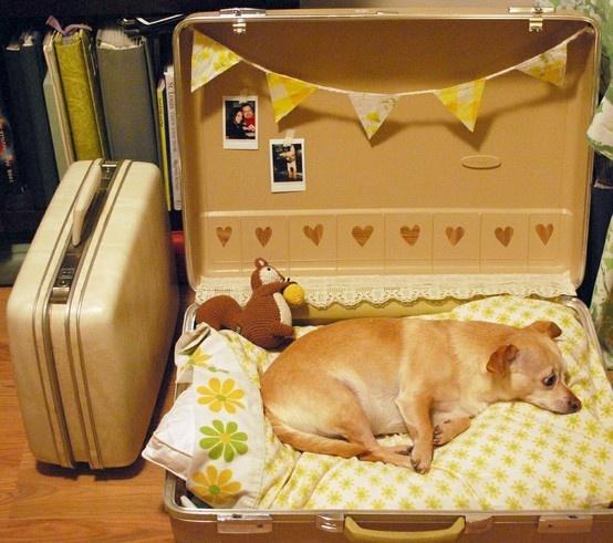 dog place (25)
