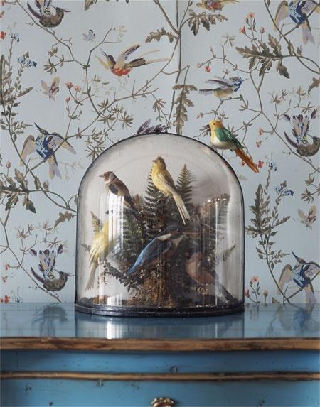 bird  (31)