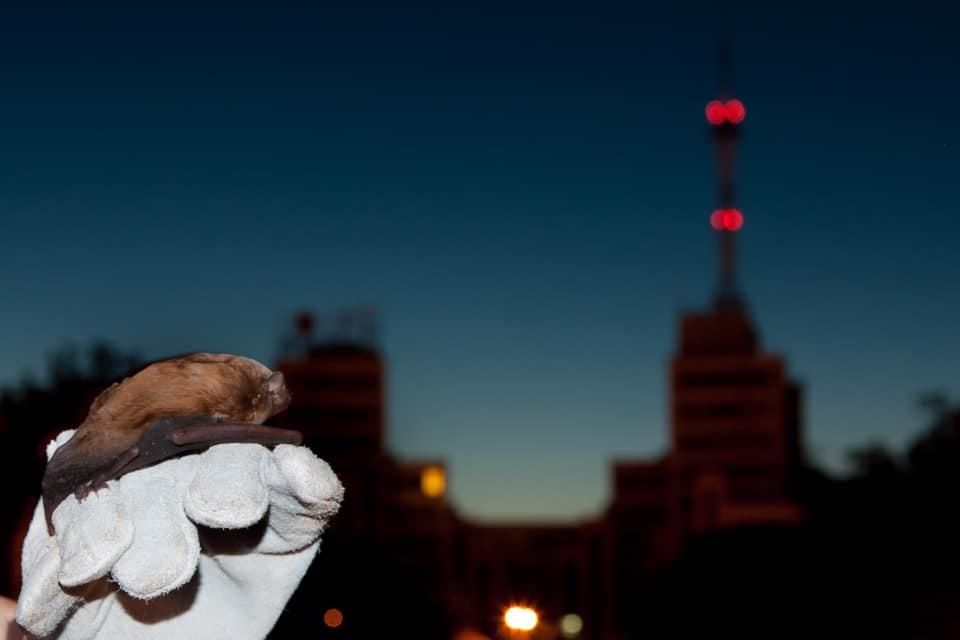 Ночь летучих мышей