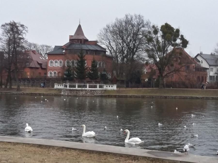 калининград в феврале фото нахожу