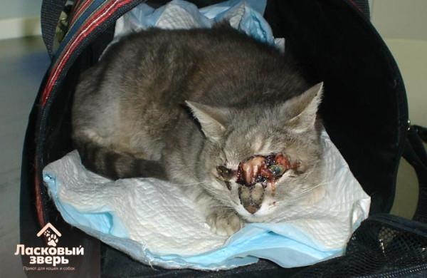 Сабуров избиениях как усыпляют кошек в ветклиниках корни