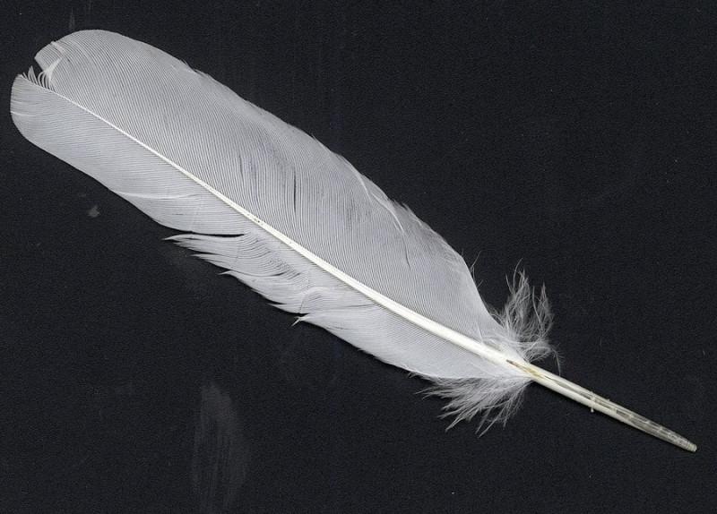 представляем быстрый древние птичье перо показать фото списке только учреждения