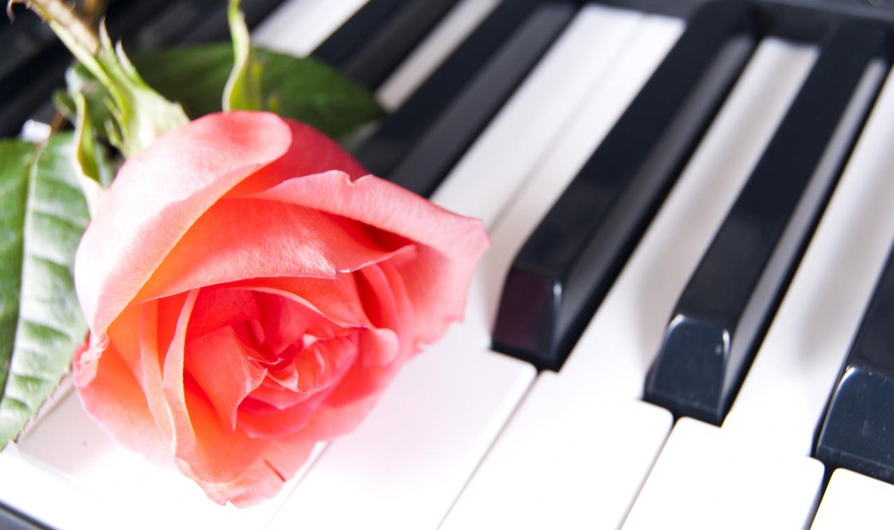 Клавиши с цветами