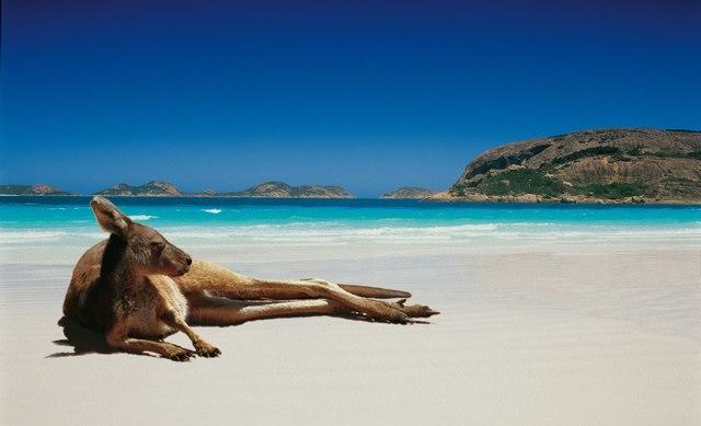 Avstraliya.jpg