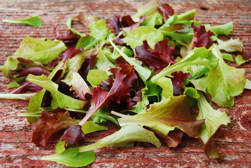 Lettuce, Gourmet Salad Mix 060911 (10).JPG