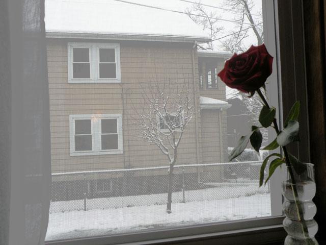 Snow-March-8-2013