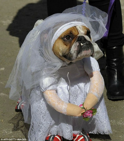 4-bride
