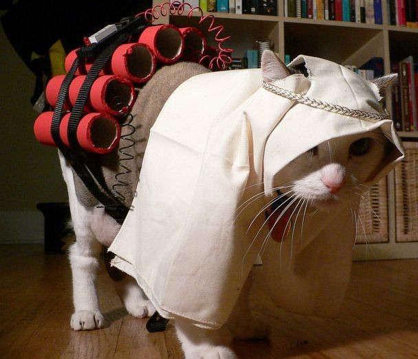 5-cat-bomber