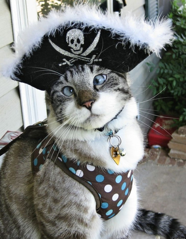 6-cat-pirate