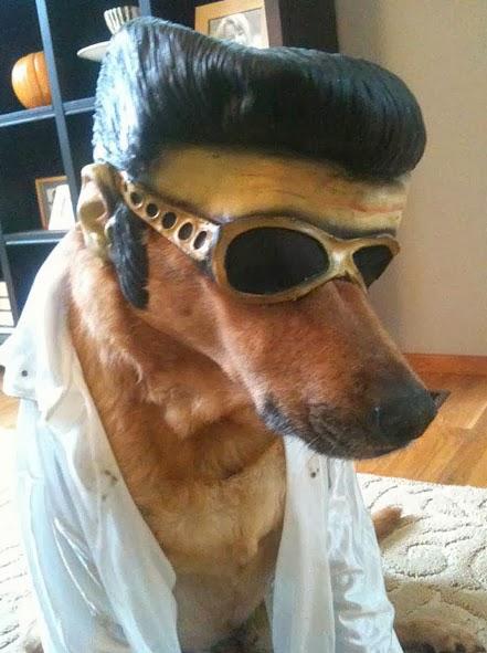 9-Dog-Elvis