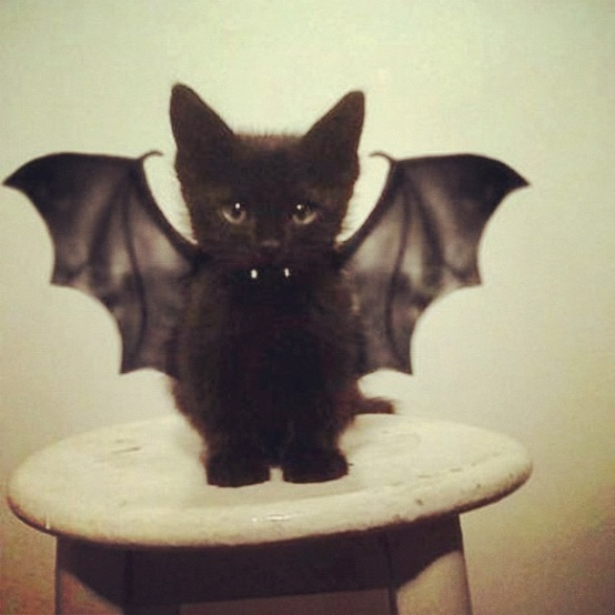 10-dracula-cat