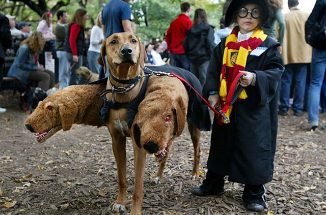 12-harry-potter-dog-costume
