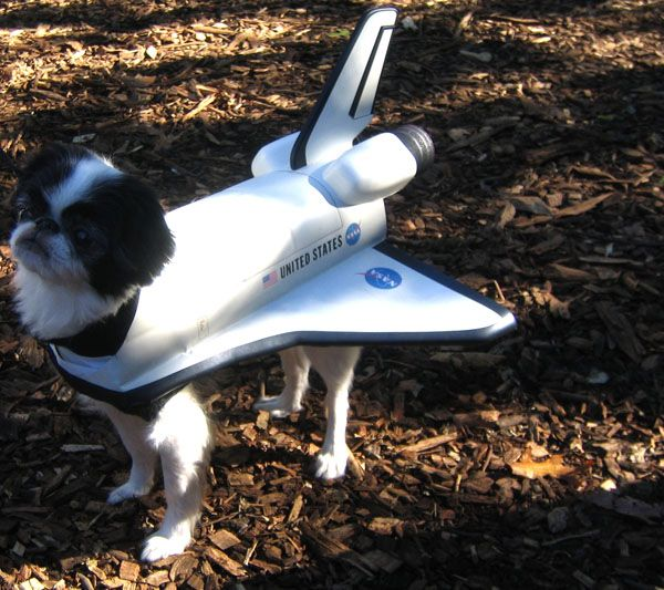 14-NASA-pet-outfit-October