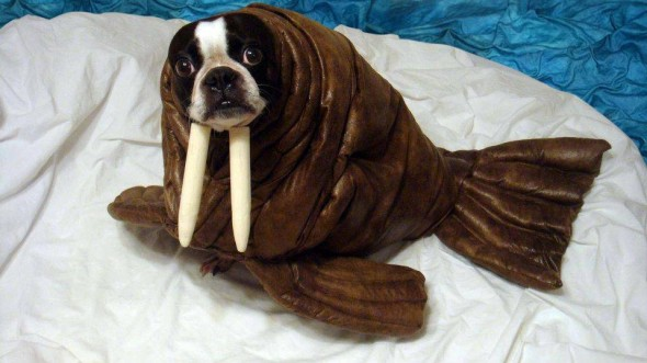 15-pets-walrus