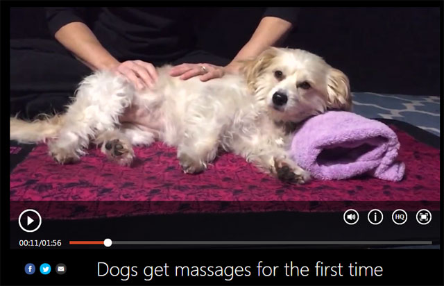 Dog-Massage-640