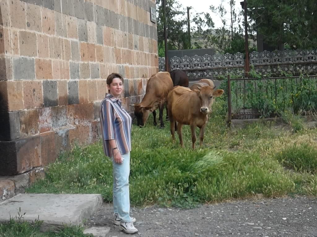 Я и коровы