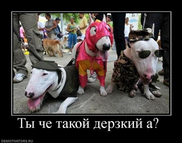 553791_tyi-che-takoj-derzkij-a-