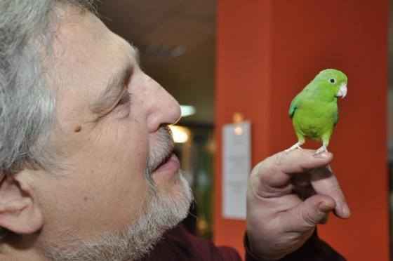 воробьиный попугайчик стесняется