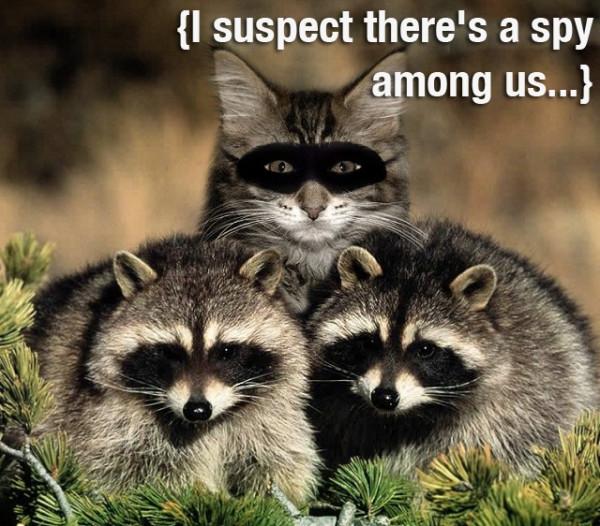 spy 3