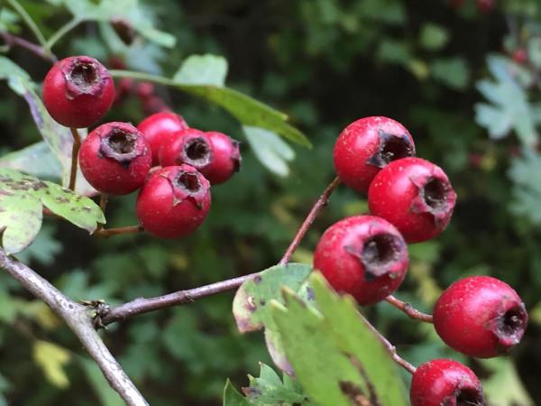 Berries-3