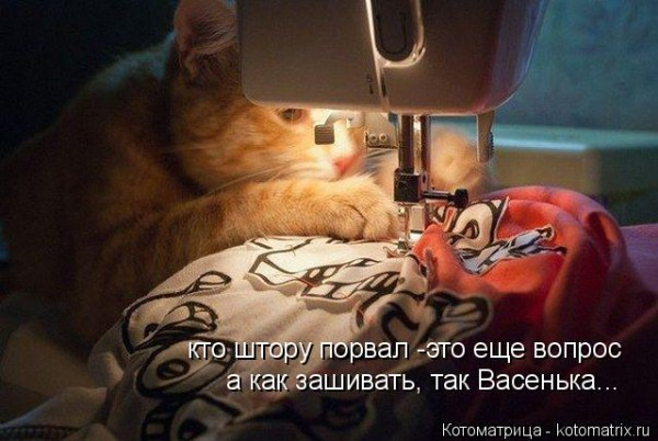 Cat sewing