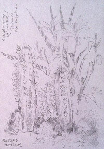 ботанический-сад-001