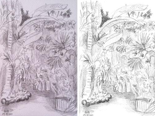 ботанический-сад-003