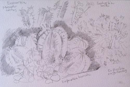 ботанический-сад-007