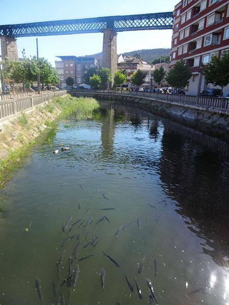 4-рыбы