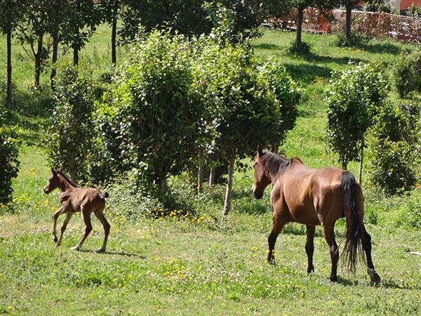 с6-лошади