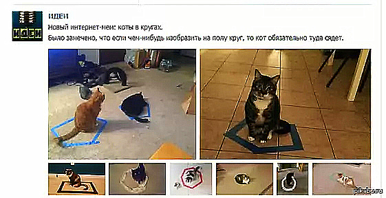 Коты в кругу