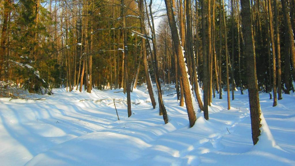 путь_по_лесу
