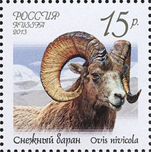 220px-Stamp_of_Russia_2013_No_1670_Ovis_nivicola