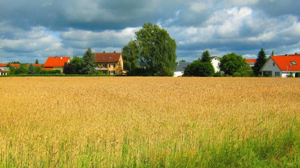 поле в городе