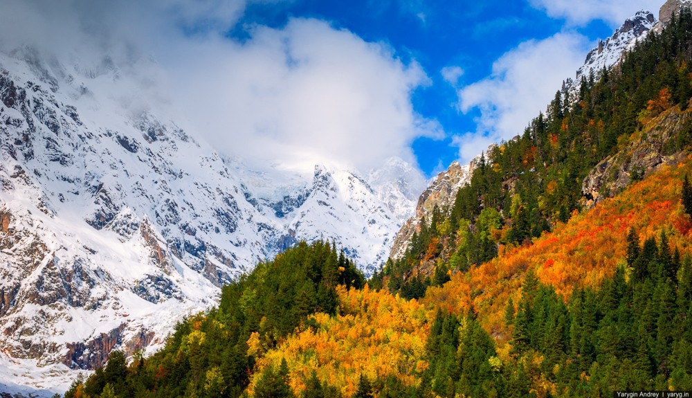 YAR_6708 Autumn Forest Against Mountains