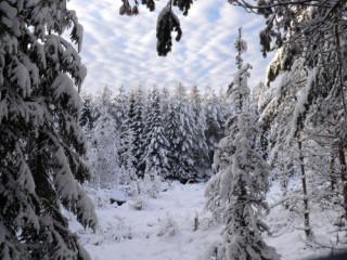 Зима пора по грибы зимние грибы и