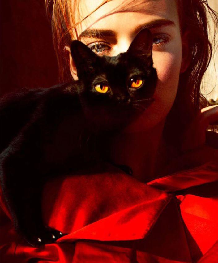 леди и котэ