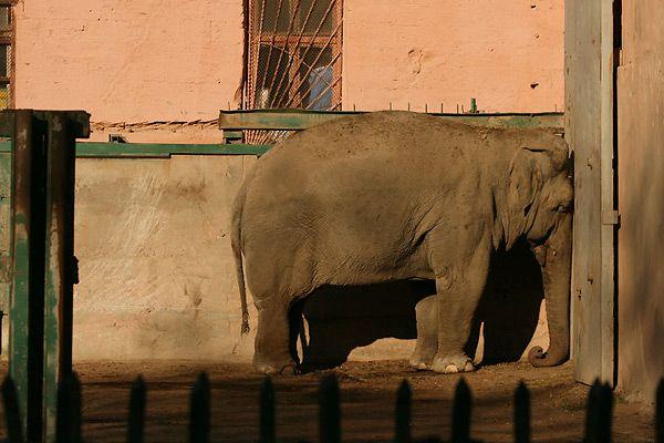 слоник наказан :)